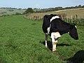 Farmland above Ogbourne St George - geograph.org.uk - 265656.jpg