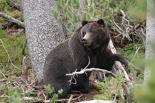 do black bears attack humans - 1024×683