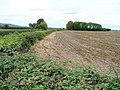 Field edge by the B4078 - geograph.org.uk - 1503020.jpg