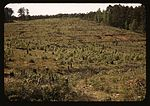 Field with tree stumps1a34433v.jpg