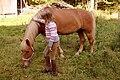 Finnish horse and finnish girl - small.jpg