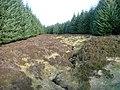 Firebreak in Cochill Forest - geograph.org.uk - 329363.jpg