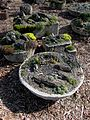 Flickr - brewbooks - Rock Garden Troughs (1).jpg