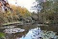 Flickr - ronsaunders47 - AUTUMNAL SHADES. 2 BIRCHWOOD WARRINGTON. UK.jpg