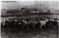 Flock of sheep with houses in background, Los Angeles County, about 1880.png