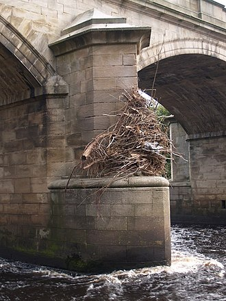 Starling (structure) - Seasonal flood debris, high above a starling