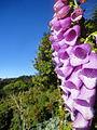 Flores Cerro El Pital..JPG