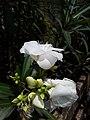 Flower1209.jpg