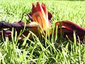 Flower in grass.jpg