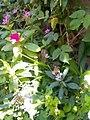 Flowers of Baghdad 6.jpg