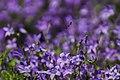 Flying bee over flowers.jpg