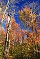 Foliage Walk (11) (30234102442).jpg