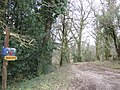 Footpath through the woods - geograph.org.uk - 324050.jpg