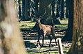 Forêt Domaniale de Rambouillet, Rambouillet, France (Unsplash).jpg
