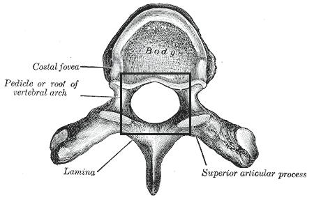 Foramenvertebrale