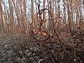 Forest - Guelph 01.jpg