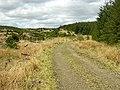 Forest Track on Gartcarron Hill - geograph.org.uk - 171386.jpg