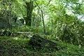 Forest in Mt.Nandai 09.jpg