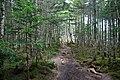 Forest in Okuchichibu Mountains 04.jpg