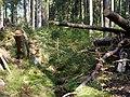 Forest near the Große Bode 06.jpg