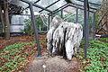 Fossil tree - Botanischer Garten, Dresden, Germany - DSC08468.JPG
