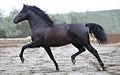 Fotografo-caballos-pura-raza.jpg