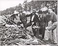 Four unidentified men discussing a large pile of wood, Drouin, Victoria (6174083656).jpg