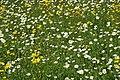 Frühlingswiese - panoramio (1).jpg