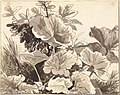 Franz Innocenz Kobell (German - Study of Coltsfoot Leaves - Google Art Project.jpg