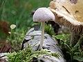 Fungi, gmina Tuczno (5).jpg