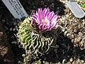 Gardenology-IMG 5203 hunt10mar.jpg