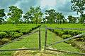 Gates to Greenery.jpg