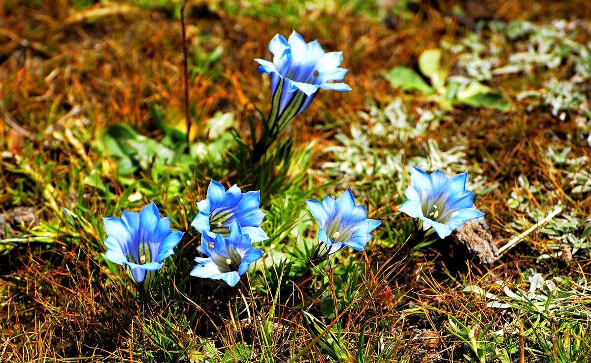 Ulubione rośliny górskie