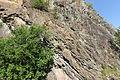 Geotop Steinbruch an der Schanz 13062015 (Foto Hilarmont) (11).JPG