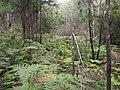 Gibberagong Trail - panoramio (5).jpg