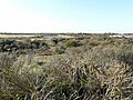 Gibraltar Point National Nature Reserve - geograph.org.uk - 1022055.jpg