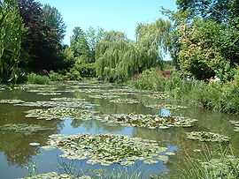 Water lilies in Claude Monet's garden in Giverny, from which he created his Water Lilies series.