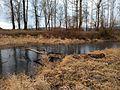 Gladwin Pond, frozen over - panoramio (1).jpg