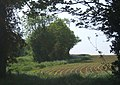 Glimpse through trees to field and lane to Barningham - geograph.org.uk - 800407.jpg