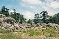 Gokhshal, Chitral Gol National Park, KPK, Pakistan.jpg