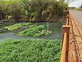 Grande seca de 2014, ponte do Rio Pardo entre Pontal e Cândia (distrito de Pontal). É possível ver o fundo do rio. No final de ano, o rio sempre vazava para fora, o que não aconteceu neste ano. A - panoramio.jpg