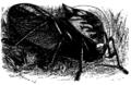 Grasshopper Mivart.png