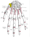 Gray220 - Trapezium bone.png