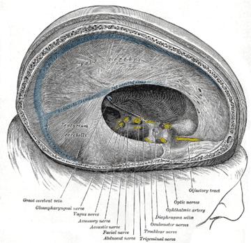 Vena cerebral magna - Wikiwand