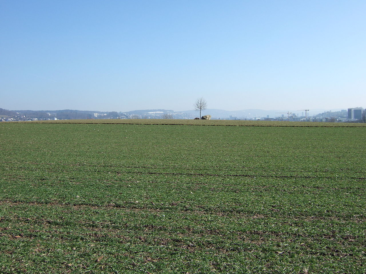 File:Green Field With East Limmattal Skyline In Background