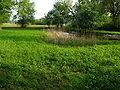 Greifensee - IMG 2497.JPG