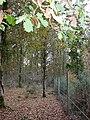 Gritnam Wood, fence - geograph.org.uk - 1570943.jpg