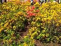 Gryshko botanical garden (May 2018) 10.jpg