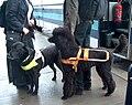 Guide dogs H0183 Villakoira-opas C.JPG
