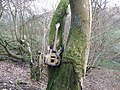 Guitar on a tree - geograph.org.uk - 1122635.jpg